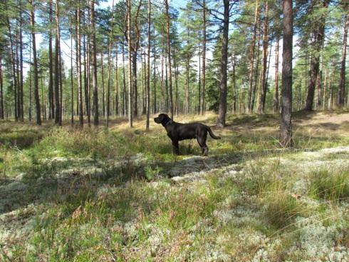 Piemājas mežā