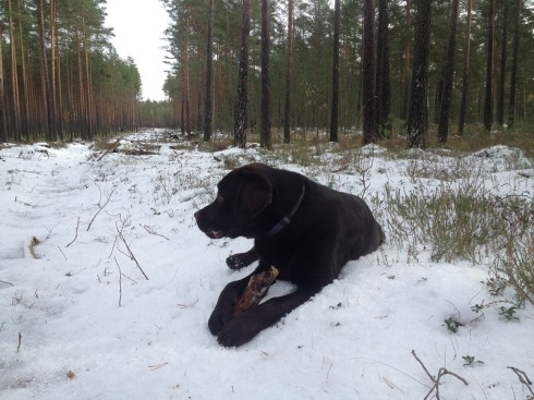 Drusku sniegs