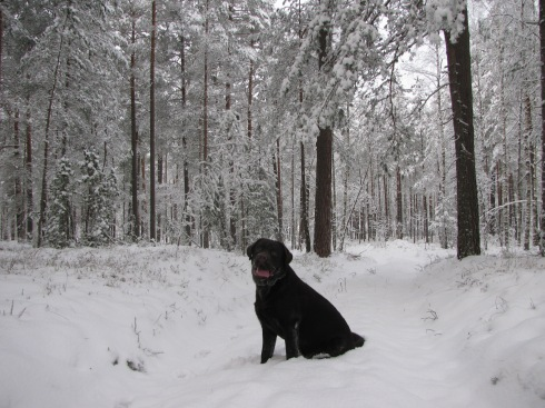 Sniega Mafins