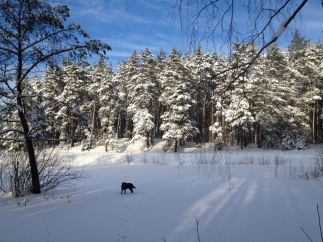 Mežā dīķis ziemā