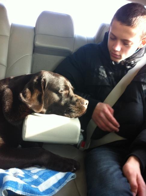 Suņa galvas plaukts mašīnā