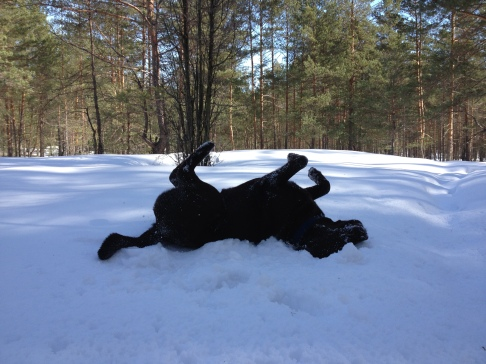Sniega prieks aprīlī, tuvojas dubļu prieks