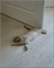 durvju turetajs