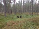 Lietainā svētdiena 01.12.2013.