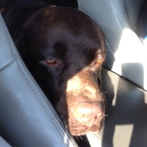 mašīnā