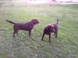 2 labs